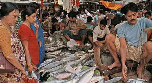 Formalin-laced fish still being sold in Goa: Congress
