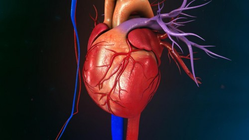 Heart attack and heart failure: Know the difference
