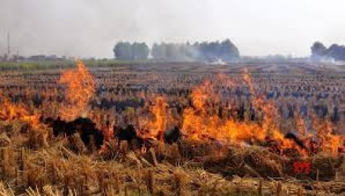 Punjab signs MoU to check stubble burning