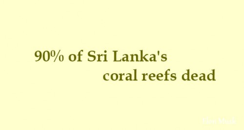 90% of Sri Lanka's coral reefs dead: Officials