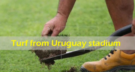 Turf from Uruguay stadium that hosted 1st World Cup bound for Russia